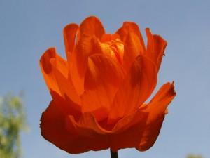 Flor grande de color naranja