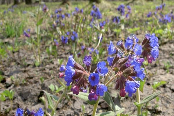 Tallos con flores azuladas