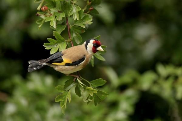 Pájaro en el extremo de la rama