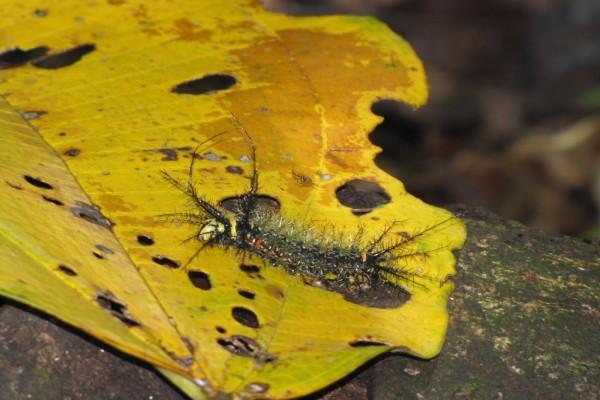 Una oruga sobre la hoja amarilla