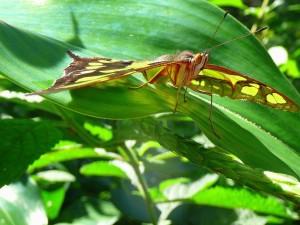 Postal: Mariposa sobre una hoja verde