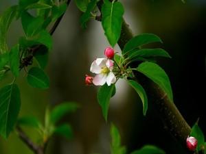 Hermosa flor entre las hojas verdes