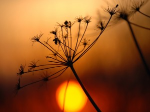 Postal: Planta y el sol al atardecer