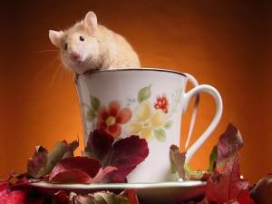 Ratoncito en la taza de té