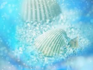 Conchas y perlas