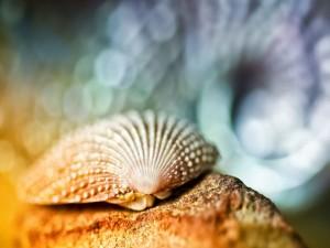 Postal: Concha marina sobre una roca