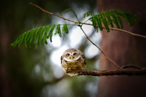 Búho atento sobre la rama