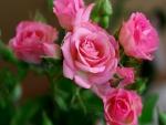 Ramo de rosas de color rosa