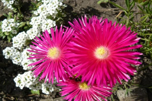 Flores brillantes de color fucsia