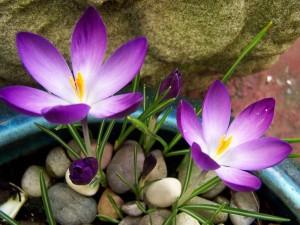 Flores creciendo entre las piedras
