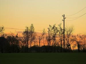 Árboles y tendido eléctrico al amanecer
