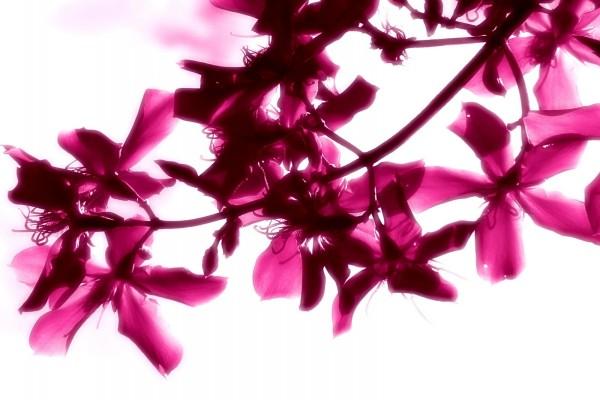 Flores rosas en la rama