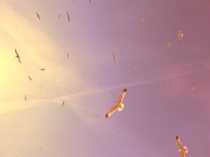 Postal: Gaviotas en el cielo
