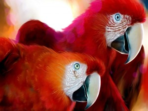 Loros rojos