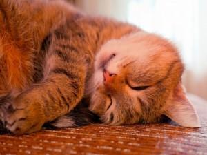 Gatito mimoso durmiendo