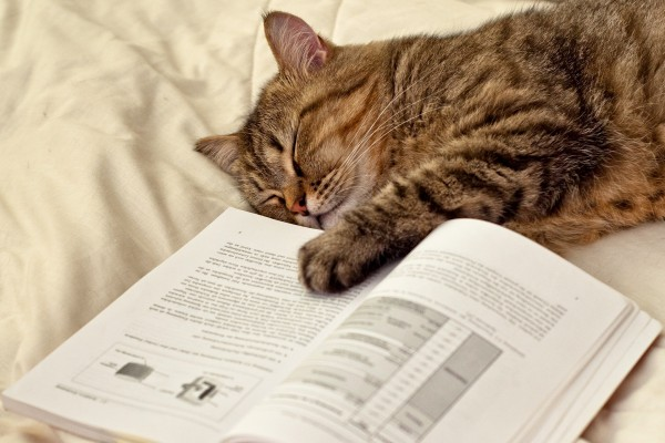 Gato dormido con una patita sobre el libro