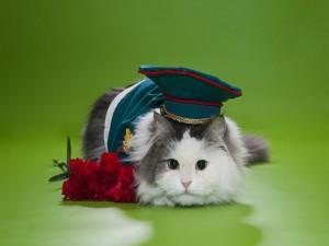 Postal: Lindo gatito con sombrero y flores