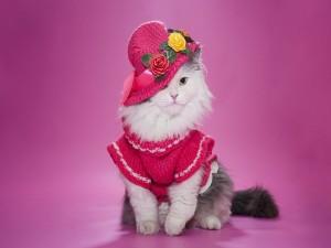 Elegante gatita con sombrero y vestido rosa