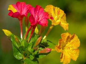 Postal: Bellas flores de dos colores