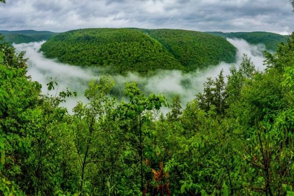 Gran Cañón de Pensilvania con niebla