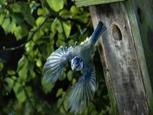 Bonito pájaro azulado