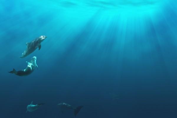 Delfines acercándose a la superficie