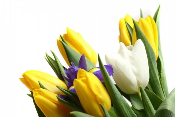 Ramo con tulipanes amarillos y uno blanco