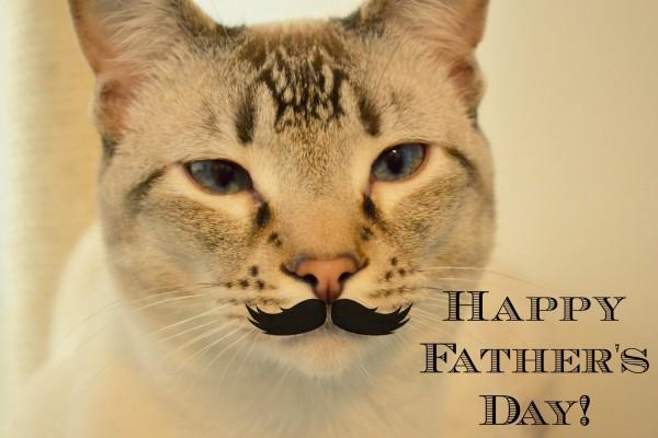 El gato desea un ¡Feliz Día del Padre!