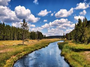 El curso de un río en la naturaleza