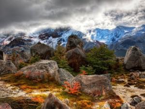 Postal: Grandes rocas y vegetación