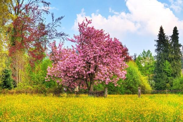 Flores amarillas y un árbol con flores rosas