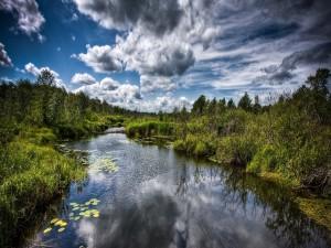 Hojas verdes en la superficie del río