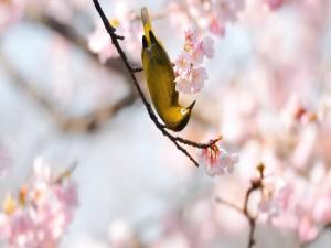Postal: Pájaro posado junto a las flores