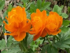 Insectos sobre las flores naranjas