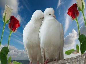 Palomas amorosas
