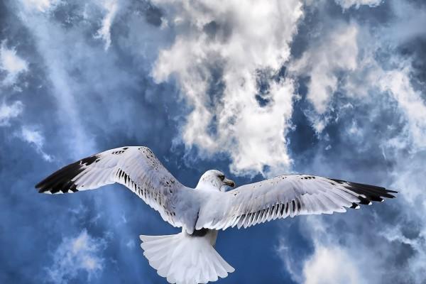 Gaviota en el cielo