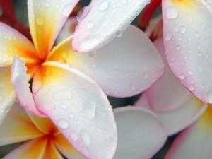 Postal: Agua sobre las flores