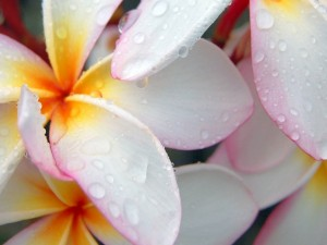 Agua sobre las flores