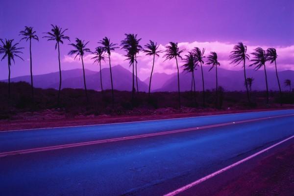 Palmeras junto a la carretera