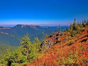 Postal: Montañas y pinos