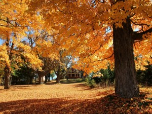 Postal: Casa en una colina, rodeada de árboles