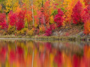 Postal: Árboles reflejados en las tranquilas aguas