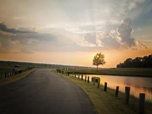 Postal: Árbol junto a la carretera