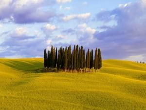 Conjunto de árboles en una colina