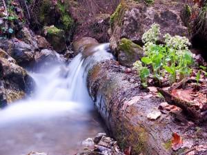 Postal: Río corriendo entre rocas y plantas