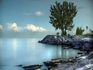 Postal: Un árbol junto al lago