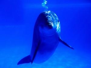 Delfín tras el cristal