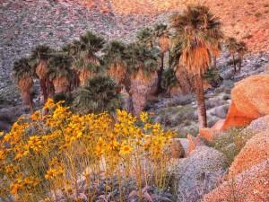 Palmeras, rocas y flores