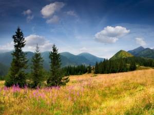 Pinos y flores en la colina