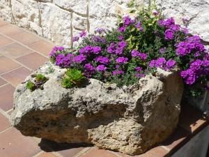 Postal: Flores en una gran piedra